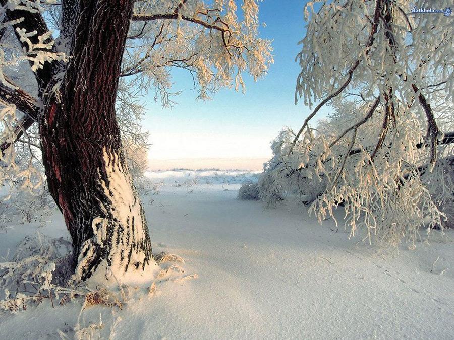 красавица зима