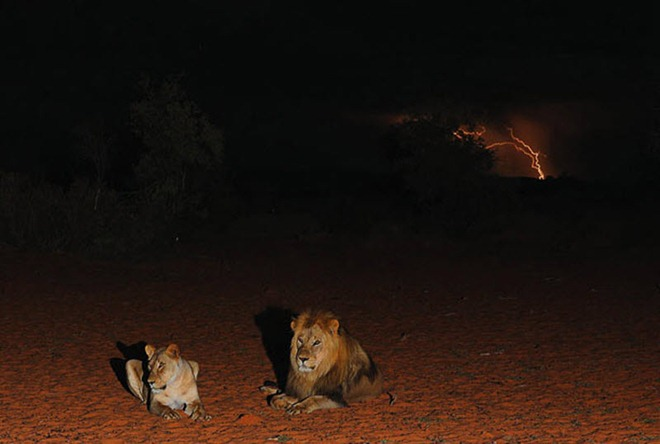 животные природа калахари
