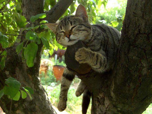 соня животные позитив сон