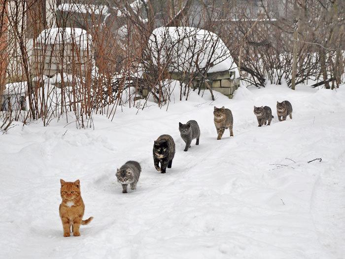 караван коты котэ кошки прикол юмор фотография