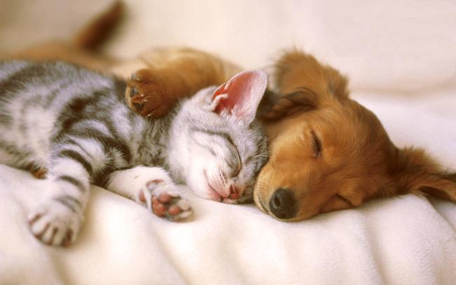 животные сон позитив
