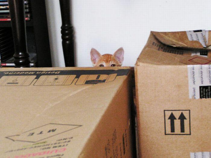 кошки слежка смотрят видят прикол юмор