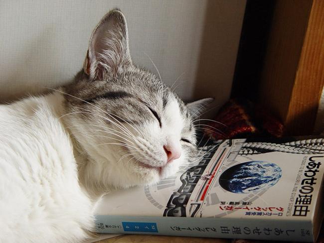 животные сон позитив кошка