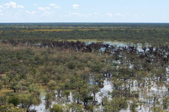 загадка летучие мыши интересно после наводнения австралия