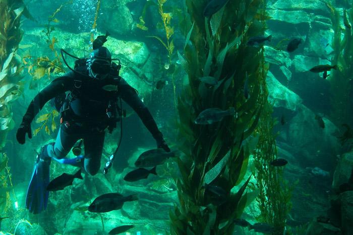 келп форест дайвинг jungle diving водоросли погружение интересно