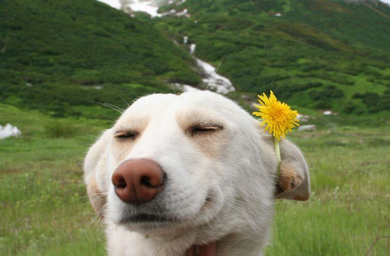 животные собака позитив