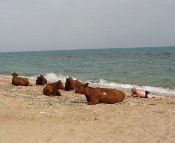 юмор пляж тёлки
