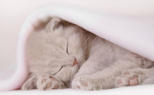 котёнок спит позитив