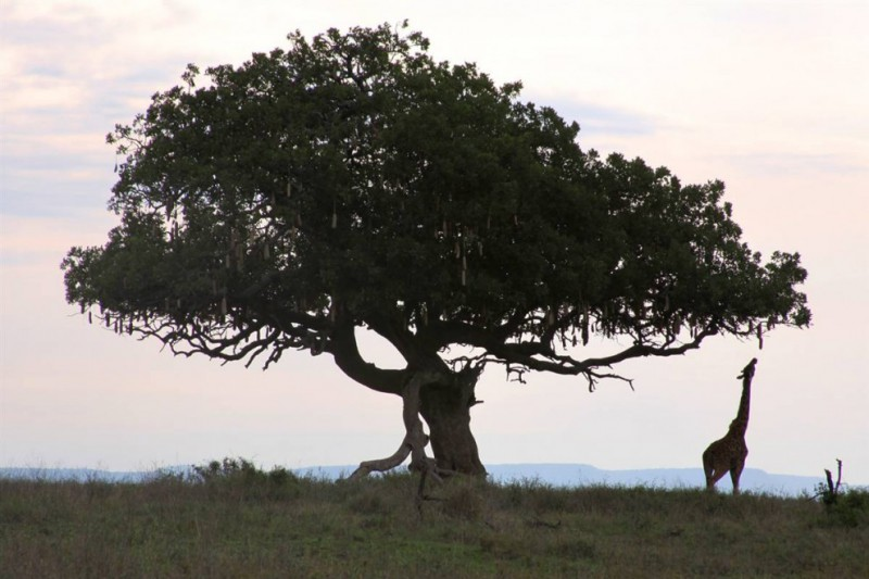 природа серенгети красота мир животные