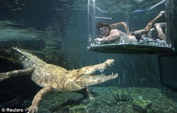 крокодил погружение экстрим интересно опасность