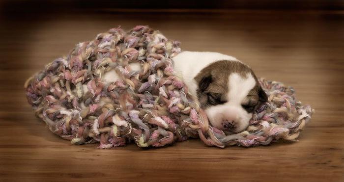 соня животные сон позитив щенок спит