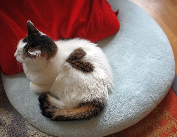 кошки любовь сердце животные позитив