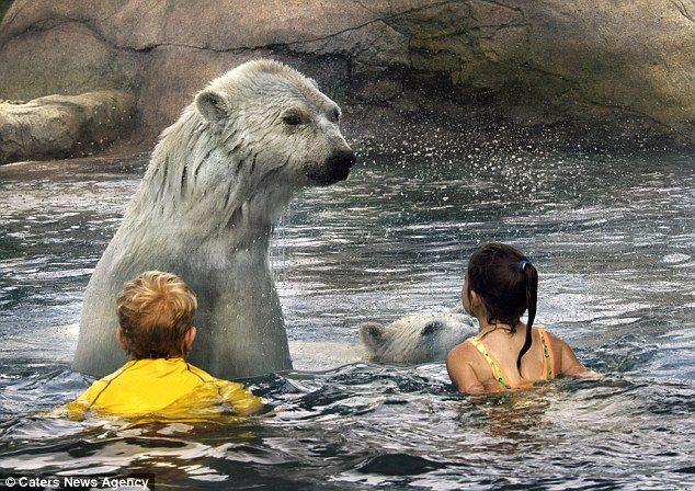 Купание с медведями