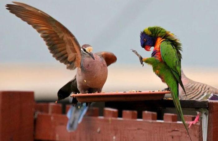 Котоматрица: Жили-были у нас на чердаке важный голубь Минин и вспыльчивый попугай Пожарский.
