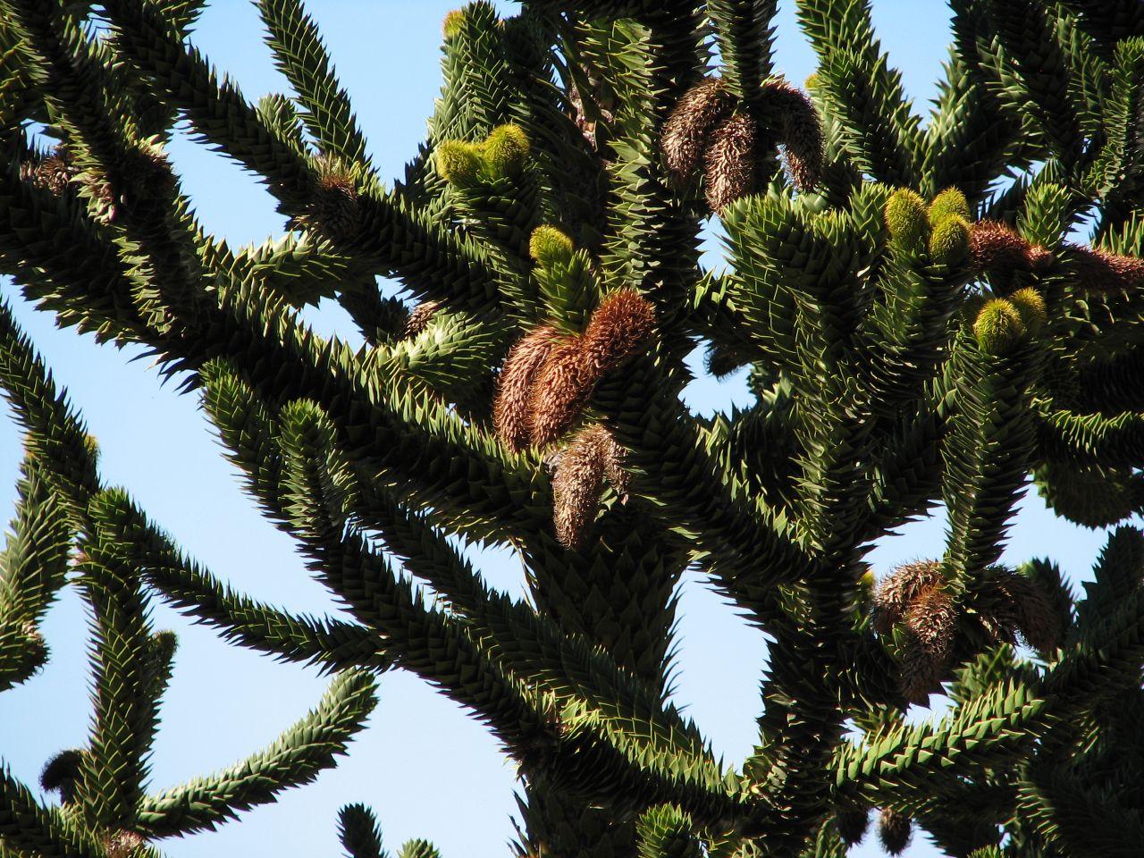 Десятка самых экзотических растений в мире