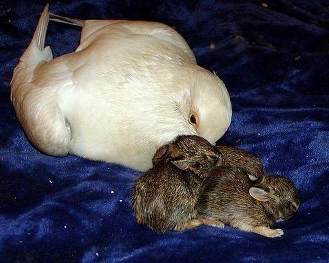 Новая семья для кроликов