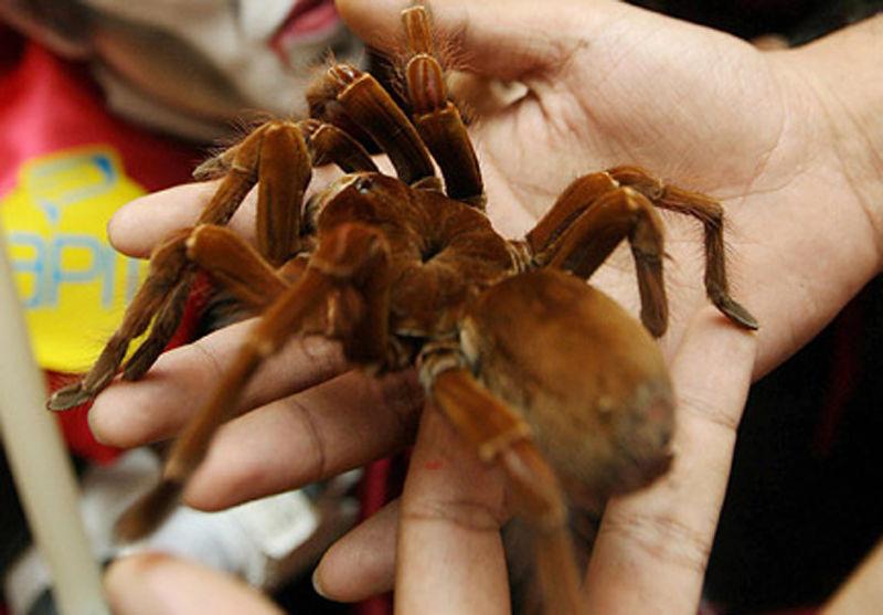 Гигантские насекомые