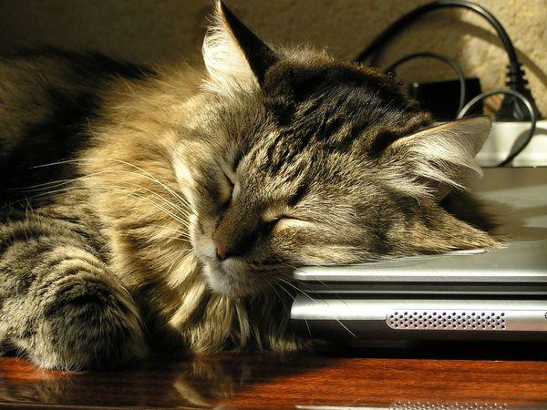 животные позитив соня сон
