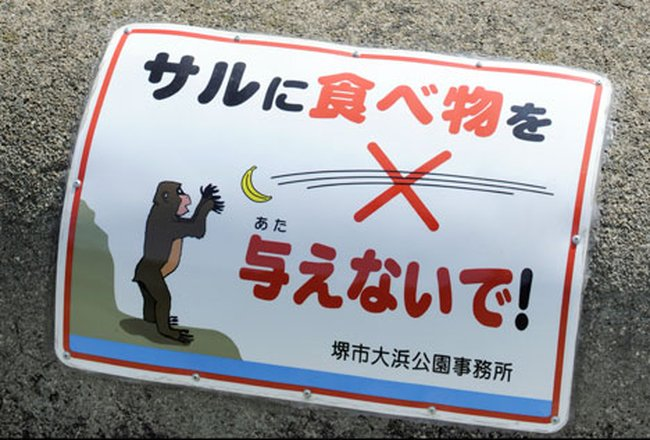 обезьян не кормить