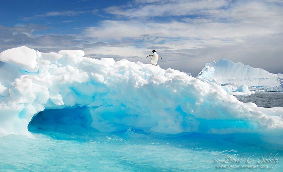 arktika-antarktika-2