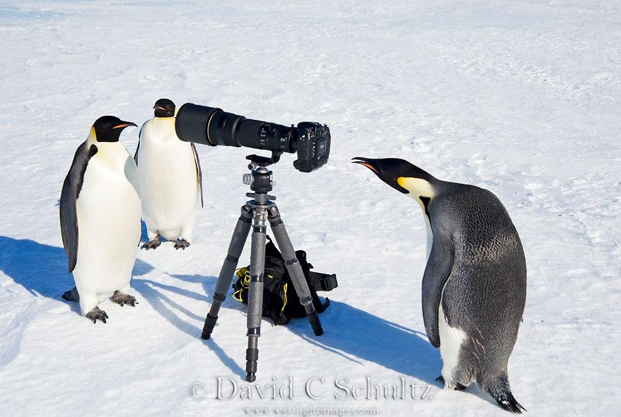 arktika-antarktika-3