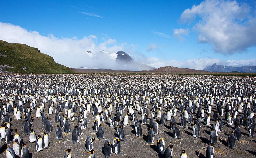 arktika-antarktika-7