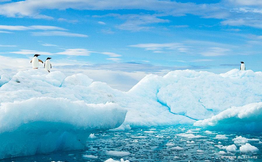arktika-antarktika-8