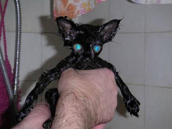 котомойка