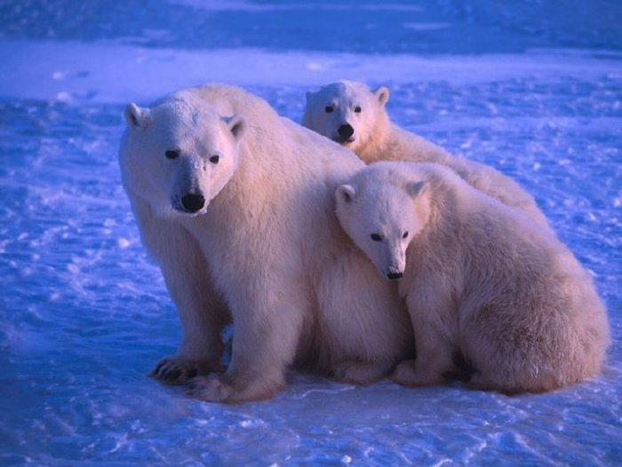 мишутки и их мамы