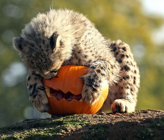 хэллоуин у животных