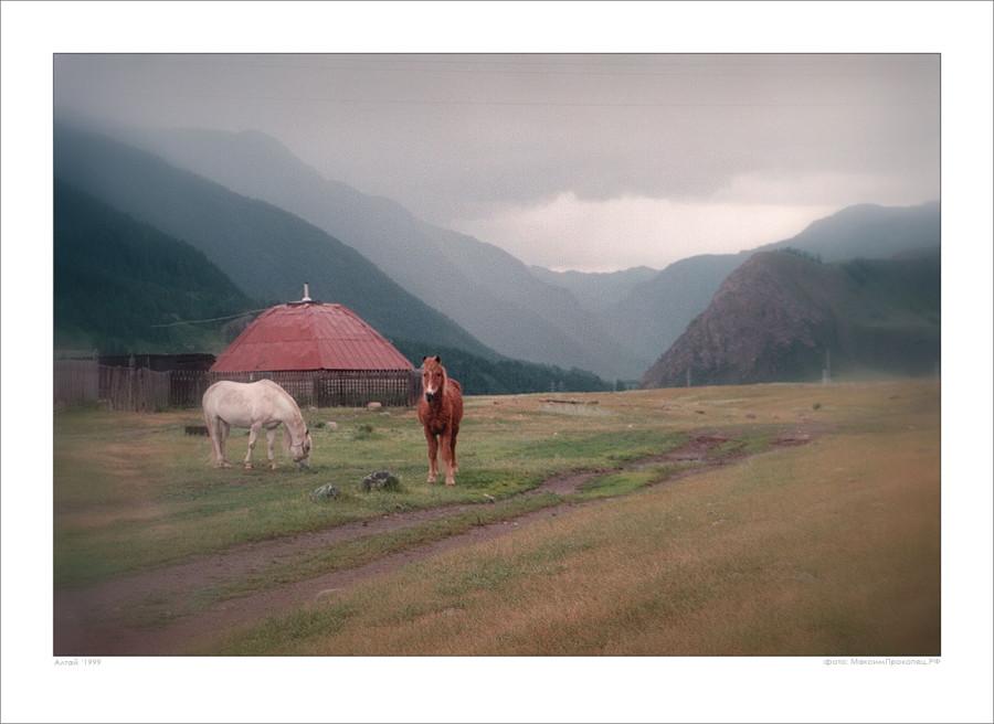 лошадки - ретушь - 2 — 1280×933