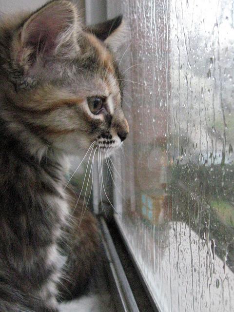 Люблю дождики