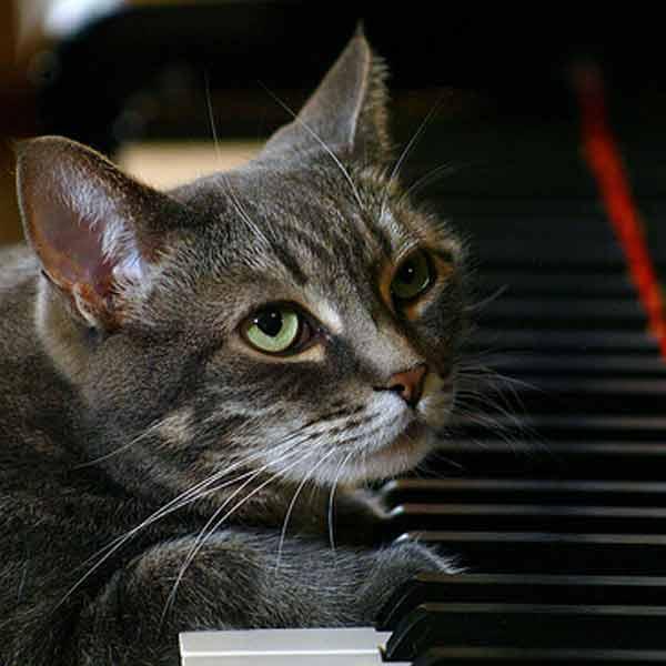 Кошачьи знаменитости
