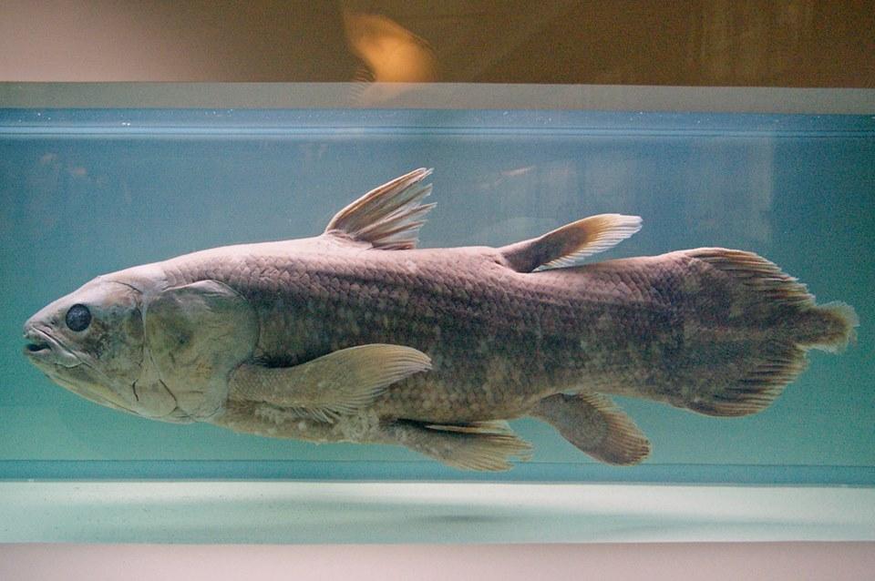кистепера рыба