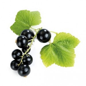 currants-black
