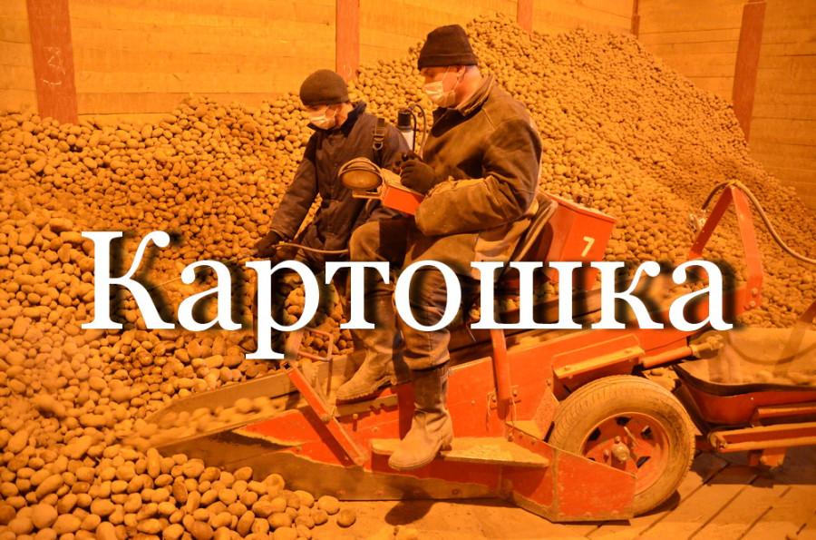 Как выращивают грибы и хранят картошку в Беларуси (видео)