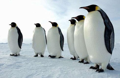b4f6926d47_24963_9866-emperor-penguins-antarctica.jpg