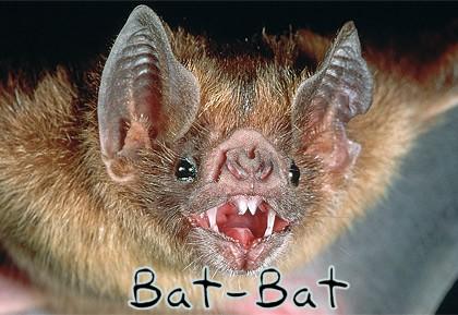Bat-Bat