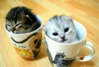 de délicieux chatons