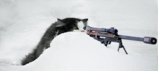 Waffen-SS miaou