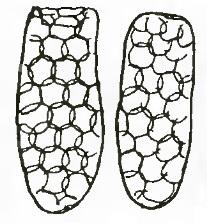 Han et al 2008 Hydrobiologia Difflugia and Rotifer