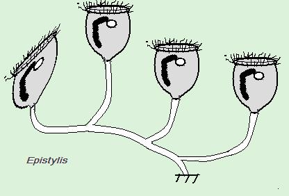 epys1