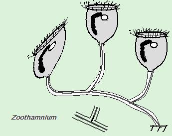 zootham1