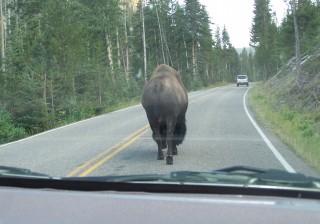 Buffalo Butt