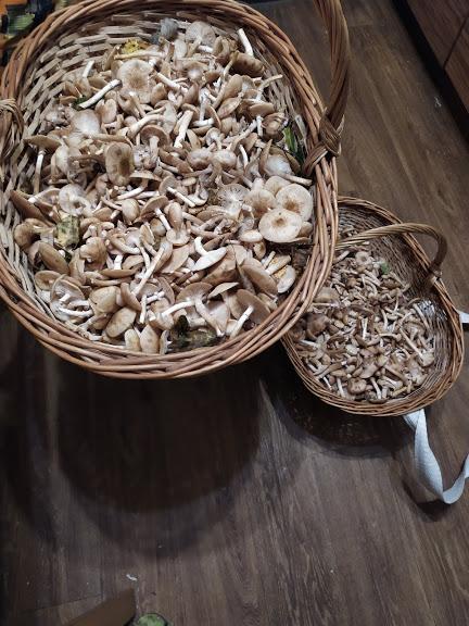 IMG_20200831_201637 грибы 2