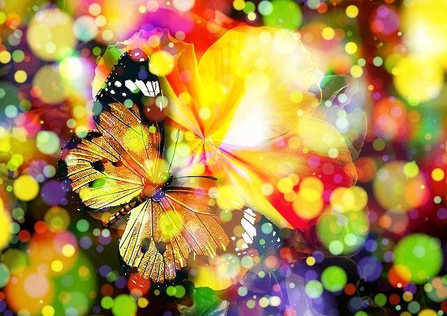 butterfly-407746_640