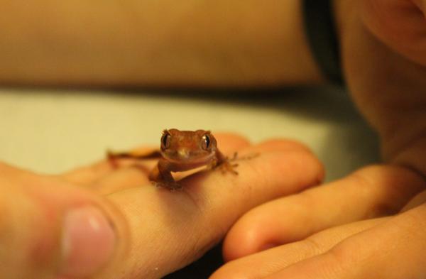 geckosmile