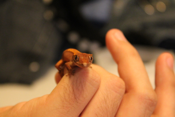 gecko917