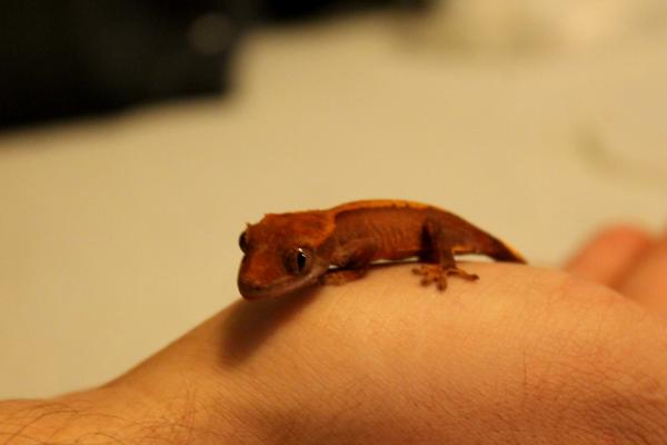 gecko9172
