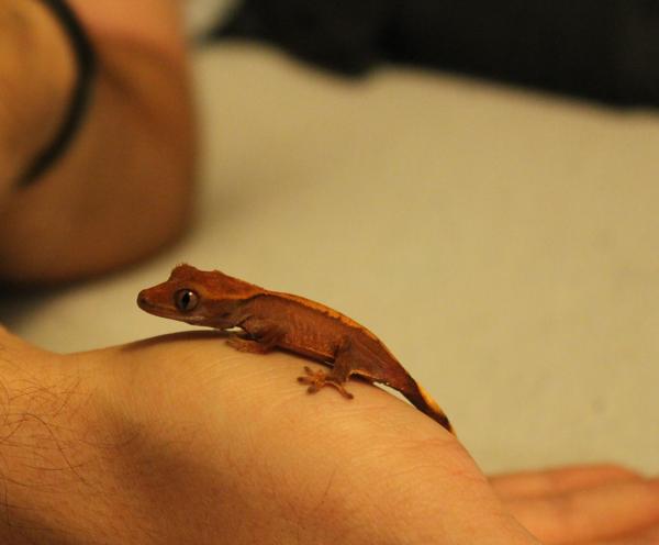 gecko9173